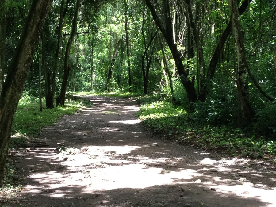 Sacbe - The Old Main Road Leading From Las Sepulturas To Copan