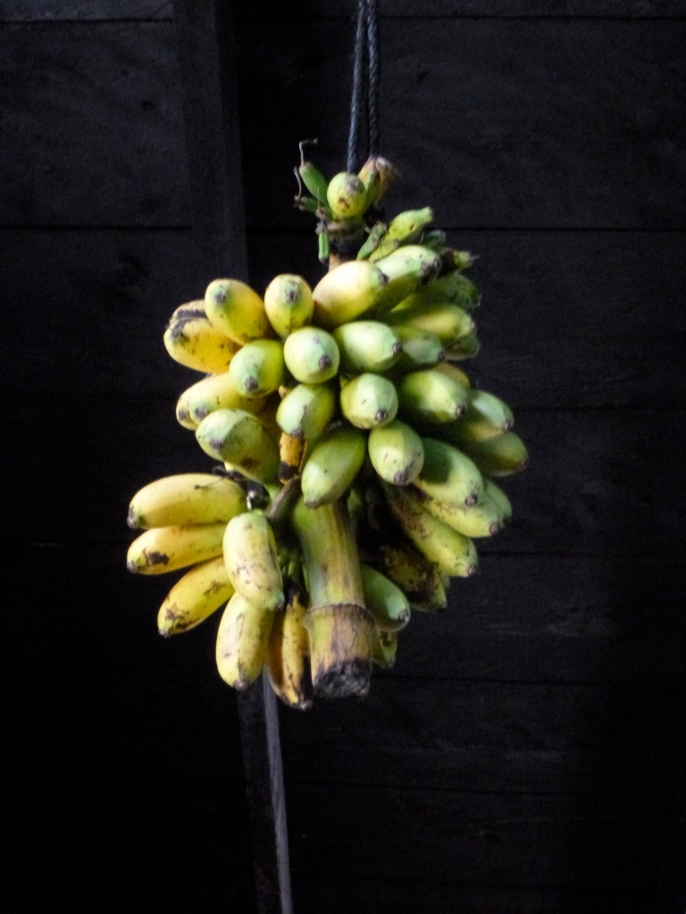 Las Michitas (Mini Bananas)