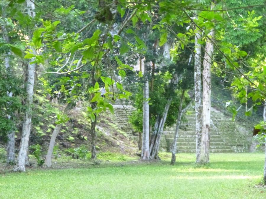 Tikal: Mayan Pharmacy Near Mundo Perdido (The Lost World)