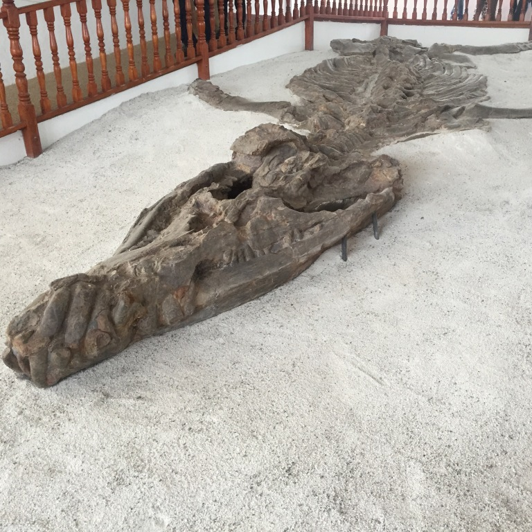 Kronosaurus Fossils Found near Villa de Leyva, Housed in Museum of Palentology