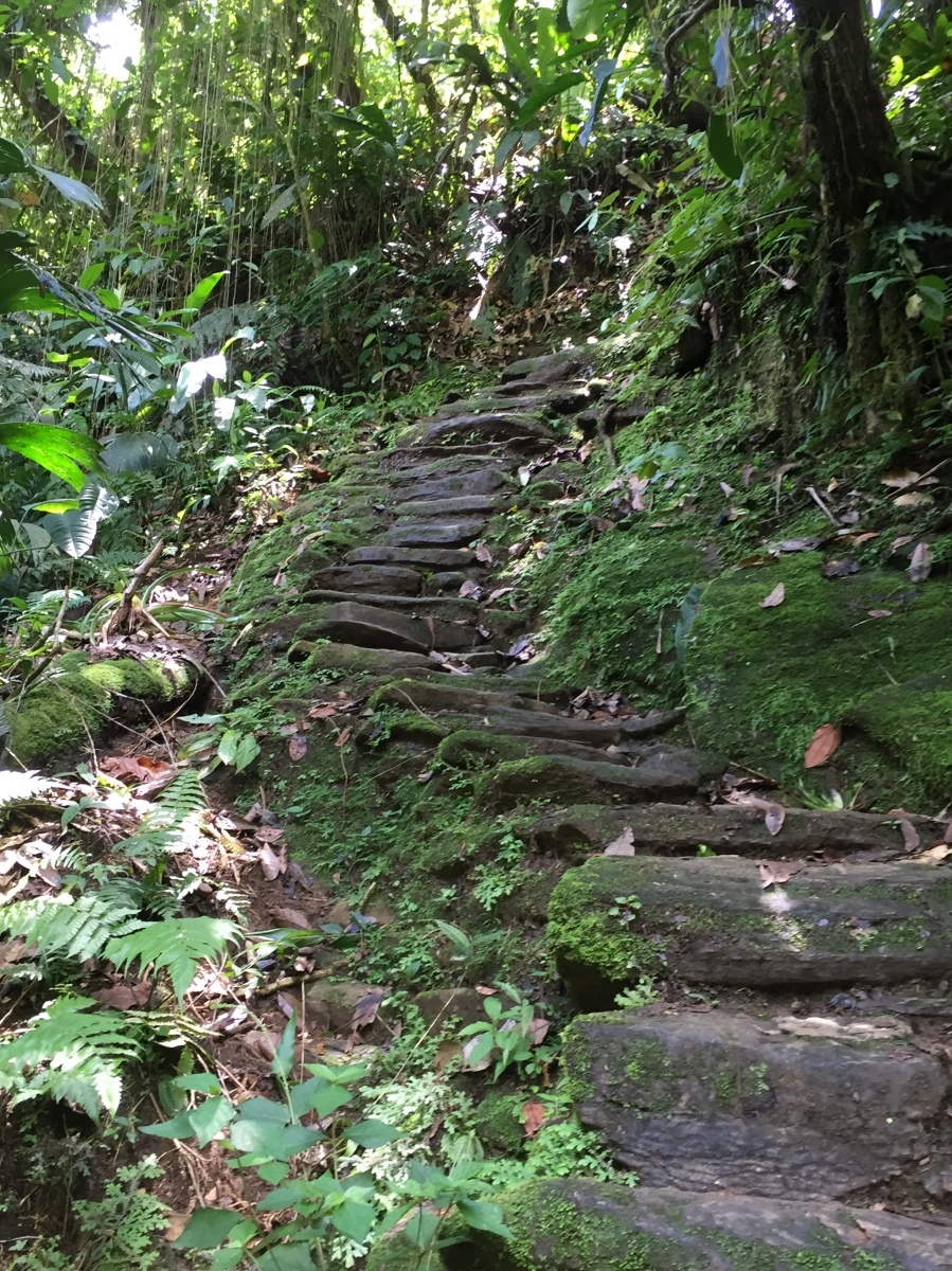 Part of the Journey - 1,200 Steps From Riverbank of Rio Buritaca to the La Galleria section of Ciudad Perdida