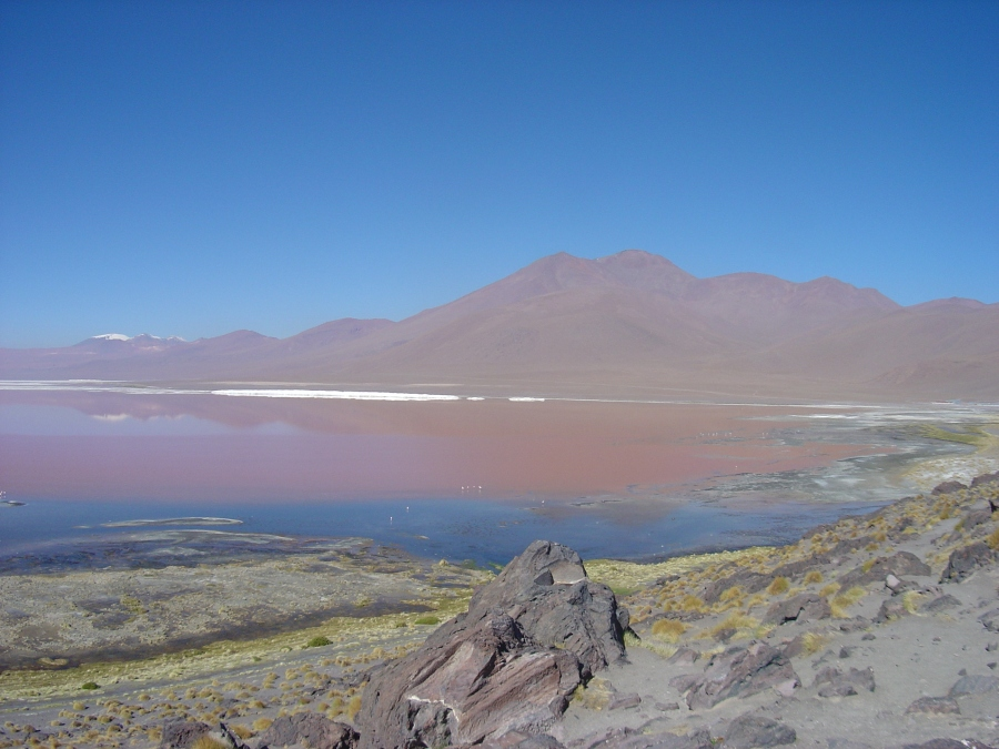 Laguna Colorada in Eduardo Avaroa Natural Reserve Park, Bolivia Altiplano (Bolivian High Plain)
