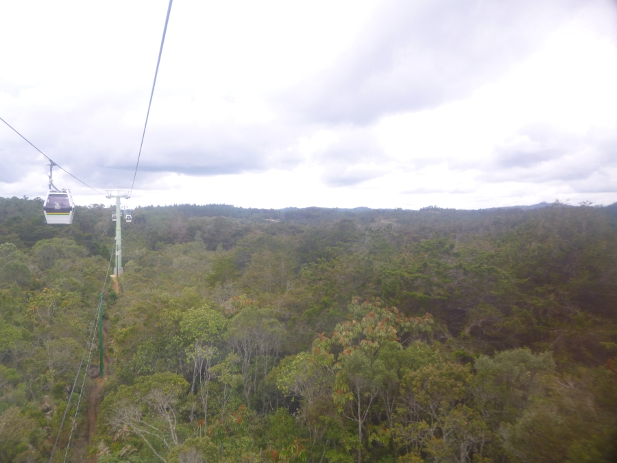 Metro Cable - Cable Car System Over Parque Arvi (Virgin Jungles Still)